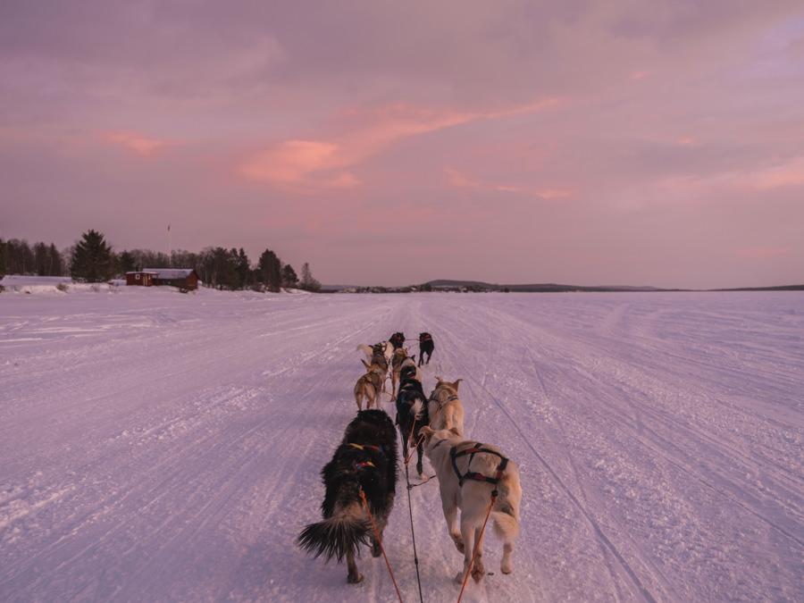 icehotel dog sledding