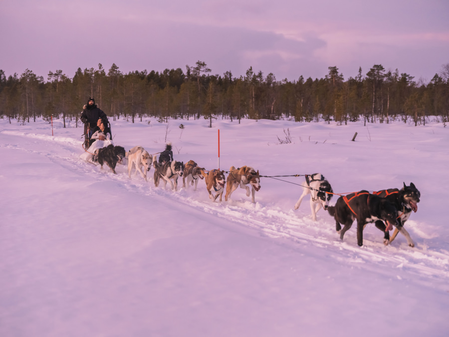 Dog sledding wedding